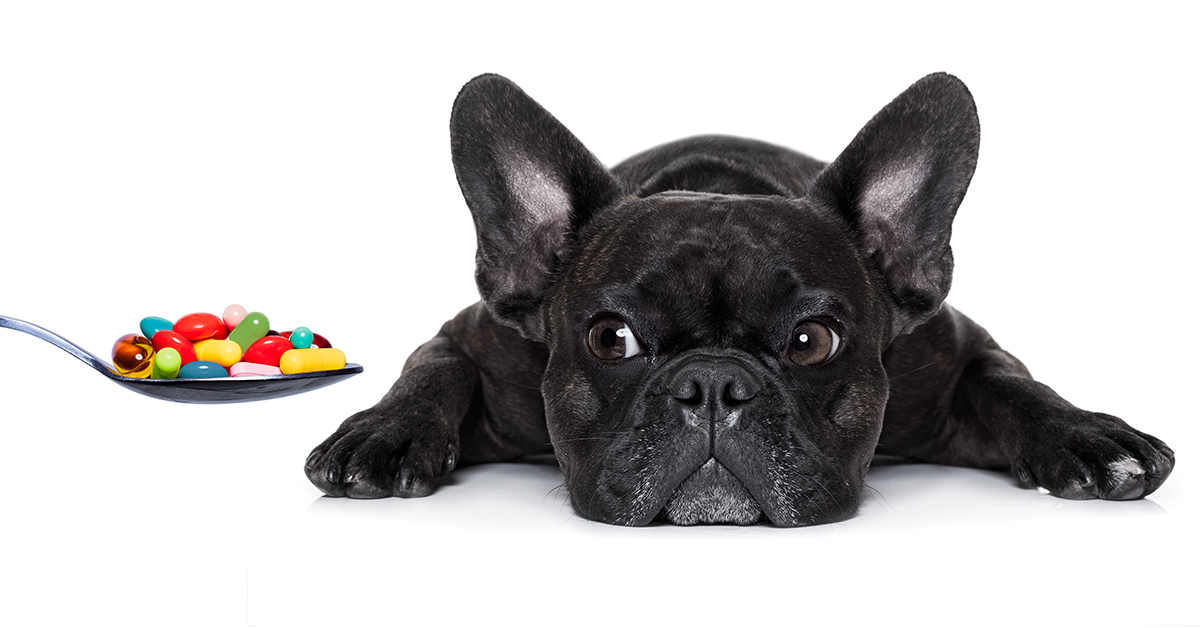 Can I Give My Dog Ibuprofen Avoid Your Dog Getting Sick