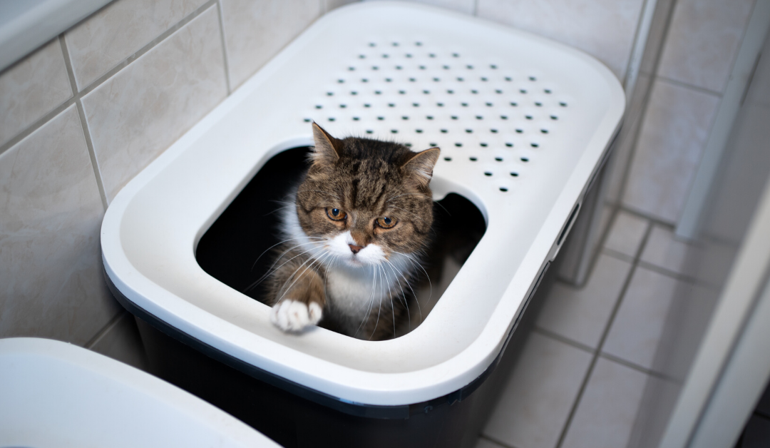 Litter Robot For Cats. Is It Worth Getting One?
