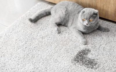 Step By Step Guide – How To Remove Cat Urine From Your Carpet