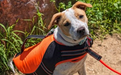 "10 Dog Cooling Vests That Reviewers Have Literally Called a ""LIFE SAVER"""